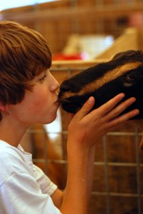 You have to kiss a lot of goats...